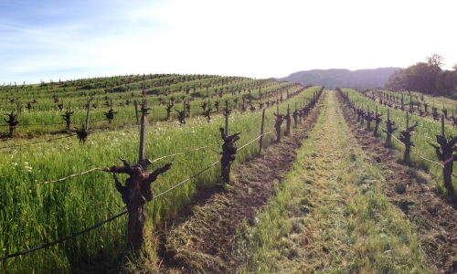 Gay Travel Guru's Perfect Gay Napa and Sonoma Valley Experience