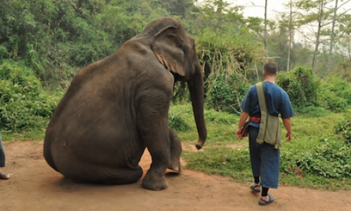 Carlos Melia Lives with Elephants in Thailand!