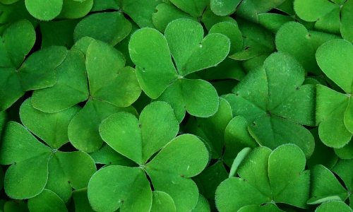 St. Patrick's Day: 5 Reasons Boston is BEST