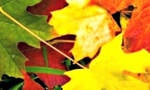 Are You a Leaf Peeper?