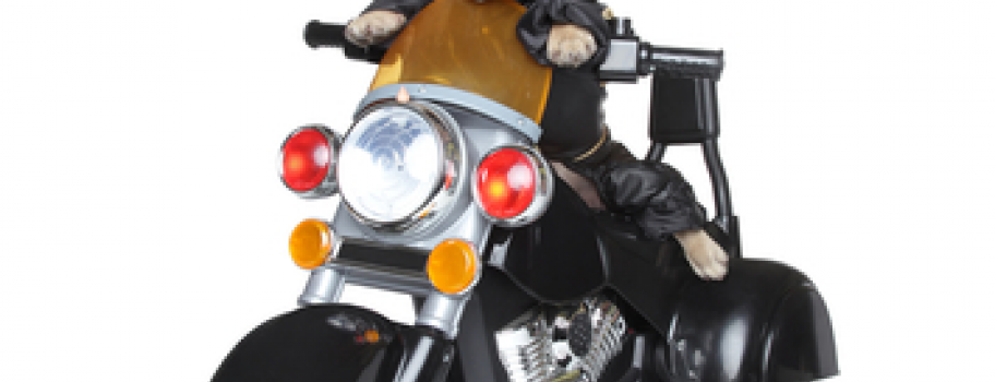 Mixing Motorcycles and Pets: Travel Tips for the Trip Main Image